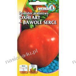 Pomidor malinowy Oxheart - Bawole serce
