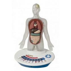 Organizm Człowieka 3D-Interaktywny 0348