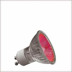Żarówka halogenowa Paulmann True Colour GU10 50W czerwona 83621