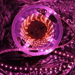 Taśma LED Eco-Led 3528 60led/m różowa (rolka 5m) 3528 60LED P NWP