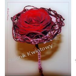 róża romantyczna