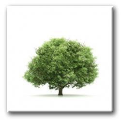Obraz z drzewem Akryl