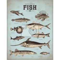 Obrazy nowoczesne do kuchni lub smażalni ryb Akryl