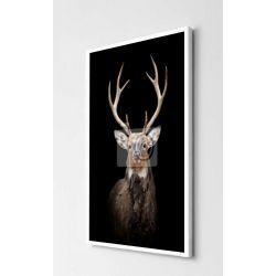 Obrazy z jeleniami