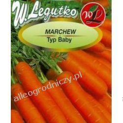 MARCHEW MIGNON TYP BABY 2g NASIONA WARZYW