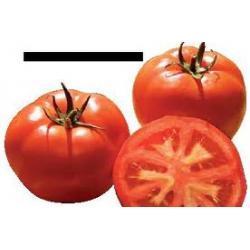 Pomidor luz