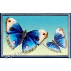 "Obraz pt "" Błękitne motyle ""  50x70 cm"