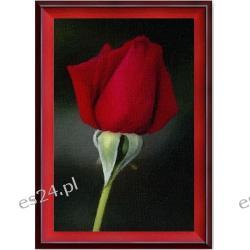 "Obraz pt "" Samotność i róża "" - format : 50x70 cm,"
