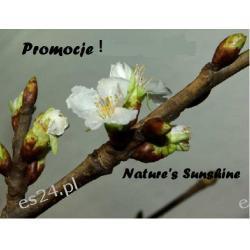 Promocje ! Nature's Sunshine  Układ pokarmowy