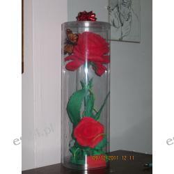Róża w tubie