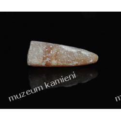 Belemnit SKAM09 Skamieliny, minerały i muszle