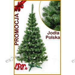 Jodła Polska 120 cm