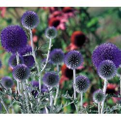 Przegorzan 10 roślin za 12 zł Masy do modelowania
