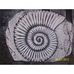 Prehistoryczna muszla odciśnięta w kamieniu. Masy do modelowania