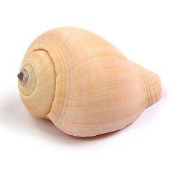 Muszle 3-6cm Figurki