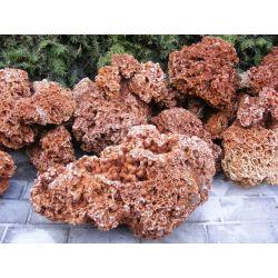 Wapień koralowiec na skalniak! Rośliny skalne