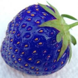 Niebieskie truskawki-nasiona!