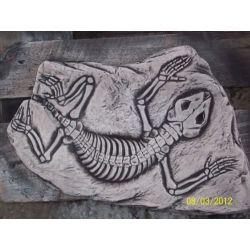 Prehistoryczny  jaszczur odciśniety w kamieniu! Pozostałe