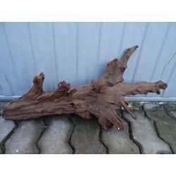 Korzeń mangrowca -duży 67 cm+ gratisy!!!!
