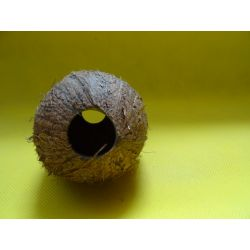 Lupina orzecha kokosowego,kokos+gratisy!!!! Figurki