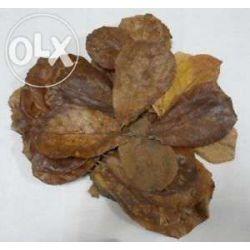 Ketapang-liscie konieczne w krewetkarium Naręczne