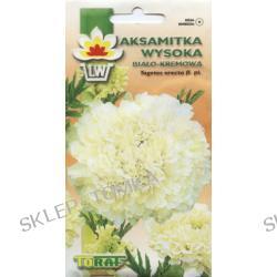 Aksamitka wysoka biało-kremowa (Tagetes erecta fl. pl.)