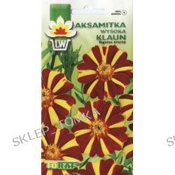 Aksamitka wysoka KLAUN (Tagetes erecta)