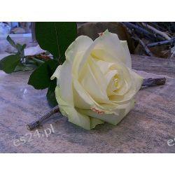 Róża Avalanche Gold 70 cm