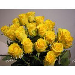 Róża Ilios 50cm