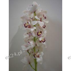 Storczyk Cymbidium 80 cm biały