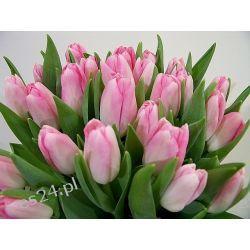 Tulipan Pink