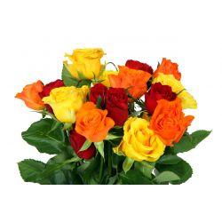 Róże Mix
