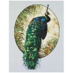 Zwierzęta - Elegancki Paw
