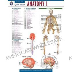 Anatomy 1, Rea's Quick Access Reference Chart by Research and Education Association, 9780738607672.