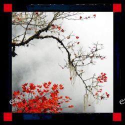 nowoczesny obraz z motywem japonskiego drzewa, ADF 032