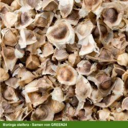 Tropica - Moringa (Moringa oleifera) - 15 Samen
