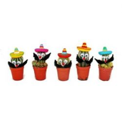 Kakteen mit lustigem Sombrero