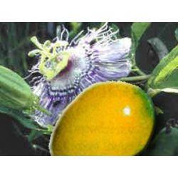 Passionsfrucht Maracuja Passiflora edulis flavicarpa Samen