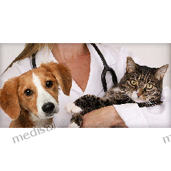 Mata magnetyczna do legowiska dla Psa XL Maty i poduszki masujące