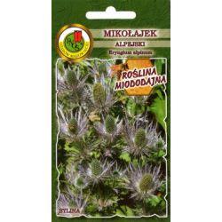Nasiona mikołajek alpejski  bylina 0,3g 70cm hit