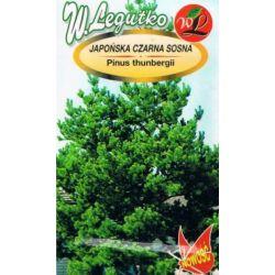 japońska czarna sosna nasiona drzewo krzewy 0,3G