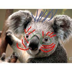 Austrailski miś koala-zabawka z pluszu