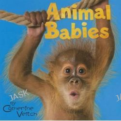 Animal Babies, Acorn: Animal Babies by Catherine Veitch, 9781432974985.