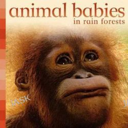 Animal Babies in Rain Forests, Animal Babies by Kingfisher Books, 9780753460603.