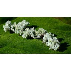 Krzewy kwitnące białe FREON Lokomotywy