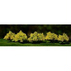 Krzewy kwitnące żółte FREON Lokomotywy