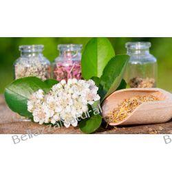 Cukrzyca typu II herbatka ziołowa Barbary Biernackiej  Zioła