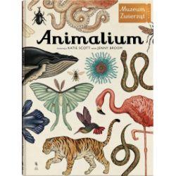 Animalium. Muzeum Zwierząt - Jenny Broom, Katie Scott - Książka