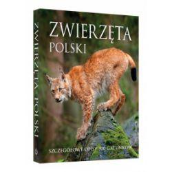 Zwierzęta Polski (oprawa twarda z obwolutą, 448 stron, rok wydania 2018) - praca zbiorowa - Książka Pozostałe