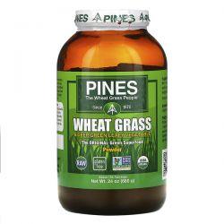 Pines International, Pines Wheat Grass, Powder, 1.5 lbs (680 g) Zagraniczne